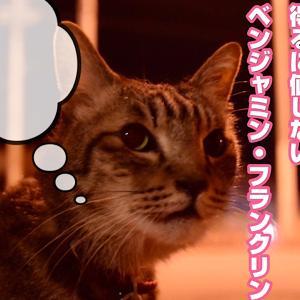 愛猫サヨリが脱走、ものの10分で保護される🐈