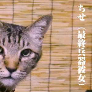 【猫雑学】猫にスイートピーは毒
