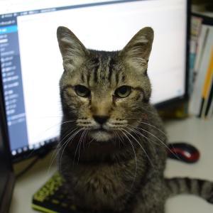 猫のホームページ屋さん