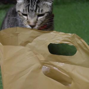 愛猫、なかを光月堂の芋パンを狙う