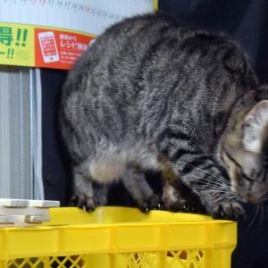 わが家の泥棒猫の証拠写真