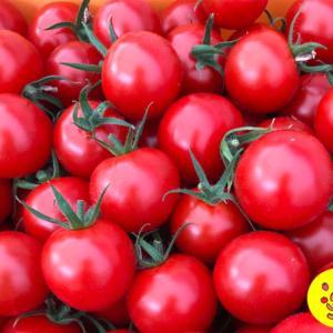 抗酸化作用に期待大♡エイジングケアに取り入れたいトマトをご紹介♪