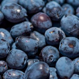 【北海道 千歳市】北国の不老長寿の果実?!滅多にお目にかかれない、珍しいフルーツをご紹介!