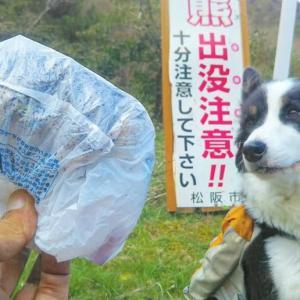 10/6 松阪市 高見山清掃登山で熊..