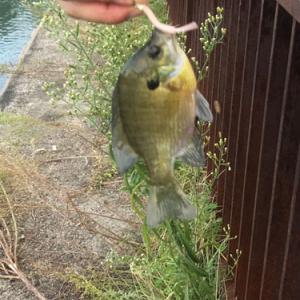 関西に来て1周年 どんな魚が釣れた!?