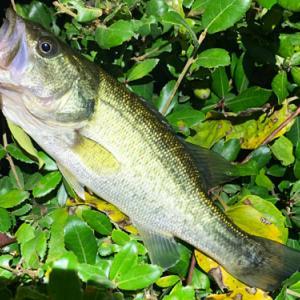 バス釣り 11月初の釣果 季節の移り変わりを感じます