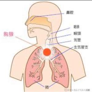 自己指圧❤️目覚めに胸腺ケア
