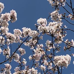 自分力UP❤️桜散歩と【自己指圧】