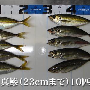 鯵とグゥフゥに泣く!柳井市の黒鯛(チヌ)釣り #042