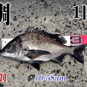 苦手な潮の流れ!周防大島の黒鯛(チヌ)釣り #020