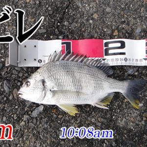 オキアミ忘れた!周防大島の黒鯛(チヌ)釣り #014