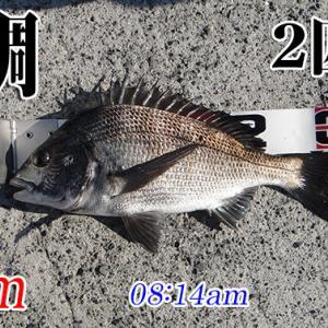 今回こそ釣るぞ!柳井市の黒鯛(チヌ)釣り #045