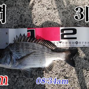 今週も強風の中の釣り!柳井市の黒鯛釣り #046