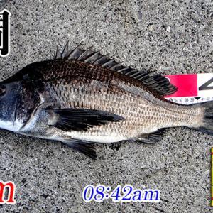 強風の中、価値ある?1匹!周防大島の黒鯛釣り #022