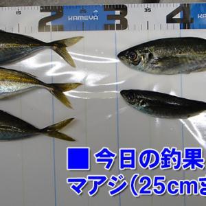 風裏を探してさまよう!周防大島の黒鯛(チヌ)釣り #015