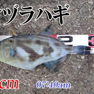 チヌ竿のインプレしたいのにチヌ釣れねぇ!周防大島の黒鯛(チヌ)釣り #025