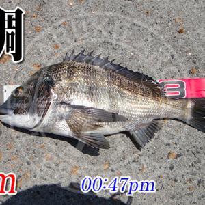 チヌ競技スペシャル4!黒鯛でインプレ!周防大島の黒鯛(チヌ)釣り #026