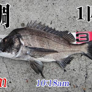 6週間ぶりの釣りには、リハビリが必要?!周防大島の黒鯛(チヌ)釣り #027