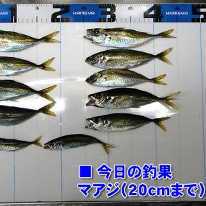 強風ぢゃ!鯵釣りしよう!周防大島のアジ釣り #006
