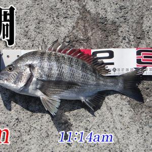 大惨敗!山口県柳井市の黒鯛(チヌ)釣り #029