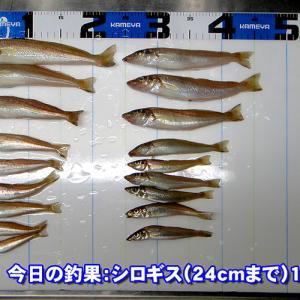 強風予報だ、投げ釣りぢゃ!周防大島のシロギス釣り #002
