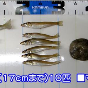 ジェット天秤でタコを釣る!島根県益田市のキス釣り#009