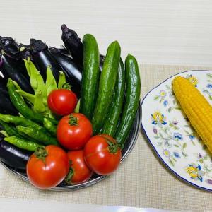 朝採れ野菜!・野菜作り!