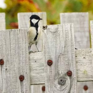 北海道放浪記 part2 第八話 霧多布岬の森の小鳥