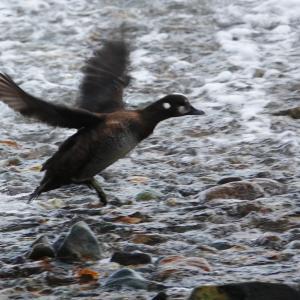北海道放浪記 part2 第十五話 秋の知床半島の野鳥たち