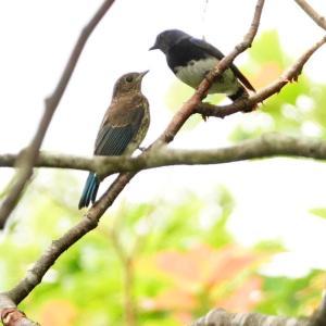 北海道放浪記 47 北海道最後の野鳥観察