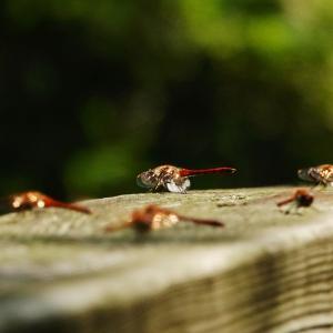 夏の思い出 昆虫編