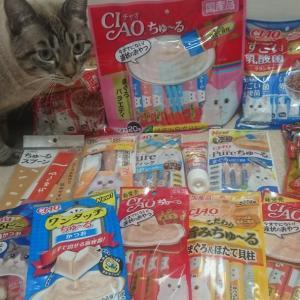 ペットのコジマ★セレブレーションバッグ