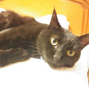 黒猫、小康状態。