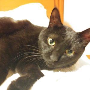 黒猫、再々診。