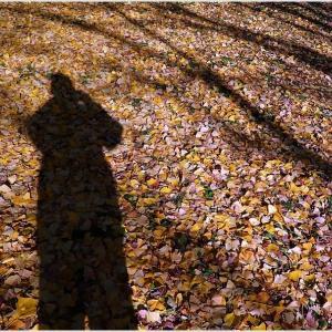 きょうの秋色