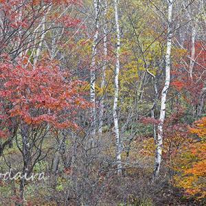 高峰高原の紅葉