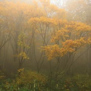 笹ヶ峰高原は紅葉が丁度良いです、