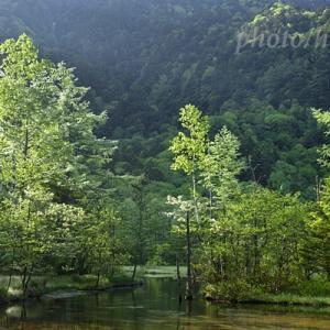 新緑の上高地 田代池