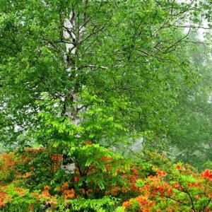 雨の八千穂高原