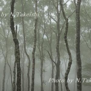 霧の白樺平