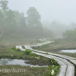 霧中の栂池自然園