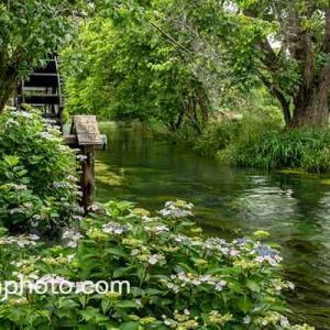 紫陽花咲く水車小屋