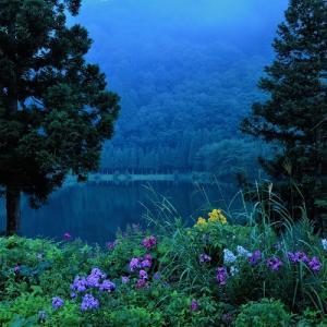 夏の中綱湖の花