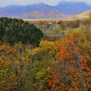 笹ヶ峰高原の紅葉情報
