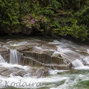 アカヤシオ咲く渓谷