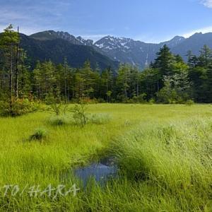 上高地田代湿原