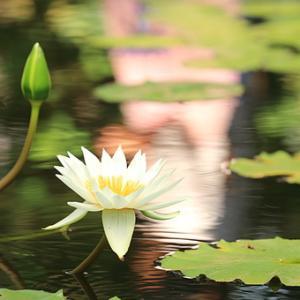 新年のヨガでヨガ始め、1/13(祝・月)〜新年のヨガとサンカルパ瞑想〜を開催します