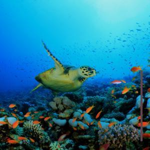 【キレイな海を守ろう】3月5日は サンゴの日