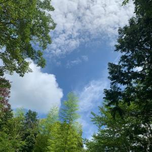 夏の暑さと湿気を感じたライド〜3週間ぶりのTOJ
