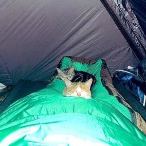 【話題】深夜のテント、足先に謎の違和感。まさか心霊現象? 恐る恐る確認したら...